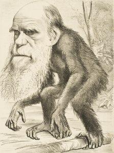 Karikatur af Darwin som abe fra 1871 (billede fra WikiMedia Commons - Public Domain)