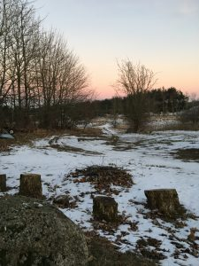 Skoven bag mit Stenhus er juletræer eller til jagt, men selvom det ikke bidrager til den globale naturkapital, er det et vigtigt sted for mig. Foto: Lilli Gruwier